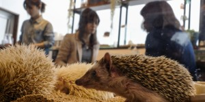 Cat cafes in Bristol and Hedgehog cafes in Tokyo!