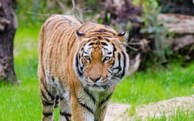 Yorkshire Wildlife Park submits £50M expansion plans